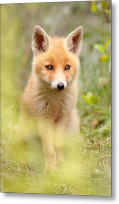 Softfox Metal Print by Roeselien Raimond