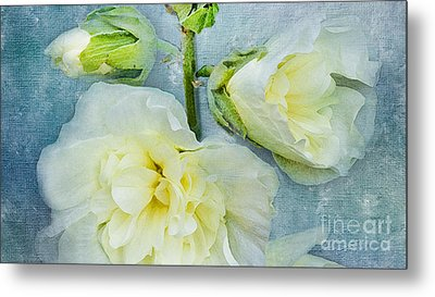 Metal Print featuring the photograph Softly by Betty LaRue