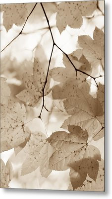 Softness Of Brown Maple Leaves Metal Print by Jennie Marie Schell