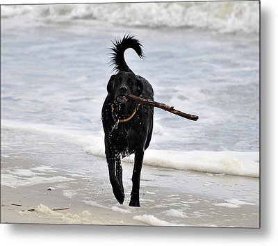Soggy Stick Metal Print by Al Powell Photography USA