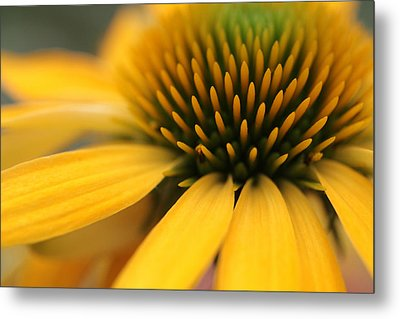 Solar Flare Metal Print by Connie Handscomb