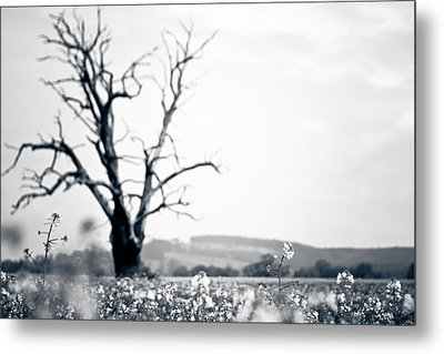 Metal Print featuring the photograph Solemn Oak by Justin Albrecht