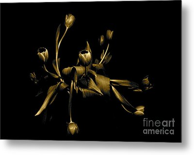 Metal Print featuring the photograph Solid Gold by Danica Radman