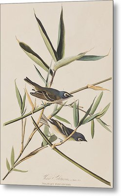 Solitary Flycatcher Or Vireo Metal Print by John James Audubon