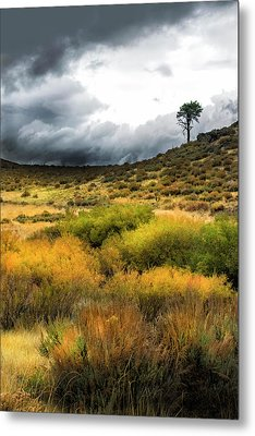 Metal Print featuring the photograph Solitary Pine by Frank Wilson