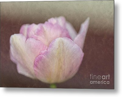Solitary Tulip Metal Print by Steve Purnell