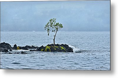 Solitude In Hilo Bay Metal Print by Christopher Holmes