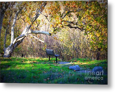 Solitude Under The Sycamore Metal Print by Carol Groenen