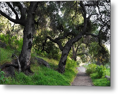 Solstice Canyon Live Oak Trail Metal Print by Kyle Hanson