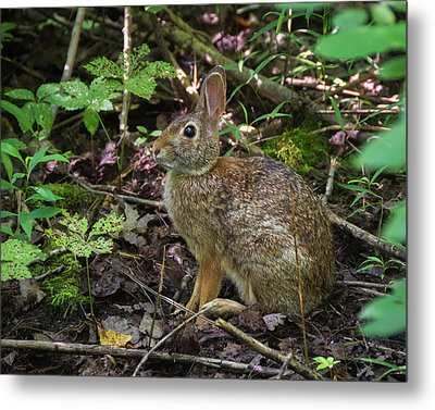 Metal Print featuring the photograph Some Bunny Stopped By by Bill Pevlor