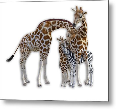 Sometimes You Have To Find The Right Spot To Fit In Metal Print by Betsy Knapp
