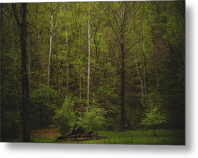 Metal Print featuring the photograph Somewhere In The Woods by Shane Holsclaw