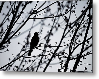 Metal Print featuring the photograph Song Bird Silhouette by Terry DeLuco