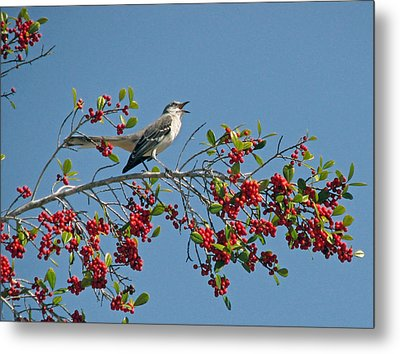 Metal Print featuring the photograph Song Of The Mockingbird by Peg Urban