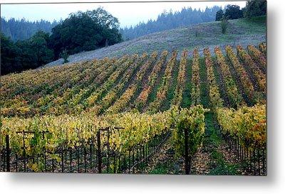 Sonoma County Vineyards Near Healdsburg Metal Print