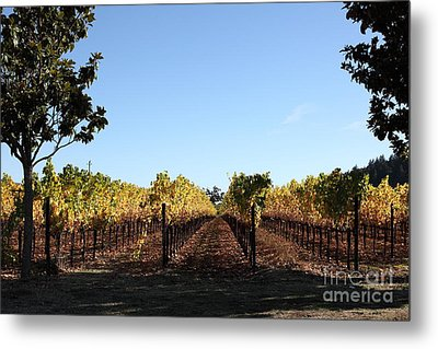 Sonoma Vineyards - Sonoma California - 5d19314 Metal Print by Wingsdomain Art and Photography