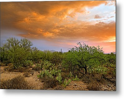 Metal Print featuring the photograph Sonoran Desert H11 by Mark Myhaver