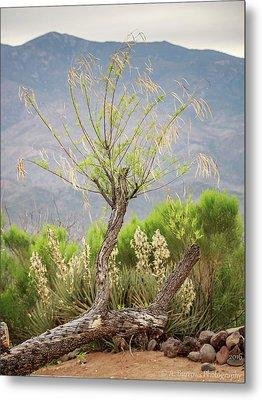 Sonoran Flora Metal Print