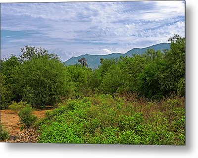 Metal Print featuring the photograph Sonoran Greenery H30 by Mark Myhaver