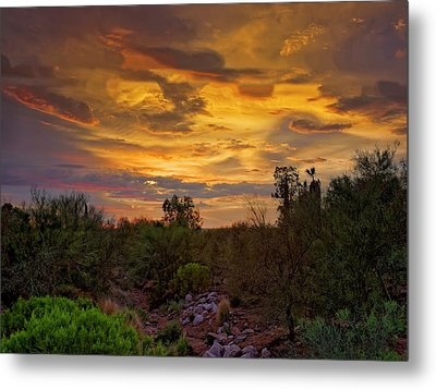 Metal Print featuring the photograph Sonoran Sonata H01 by Mark Myhaver