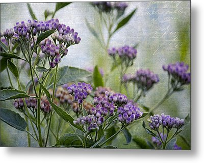 Sophies Garden Metal Print by HH Photography of Florida