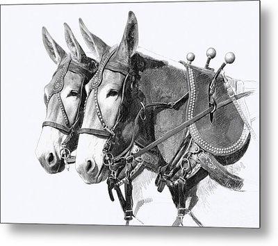 Sorrel Mule Team Metal Print by Bethany Caskey