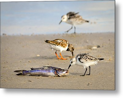 Metal Print featuring the photograph Sorry Buddy by Debra Martz