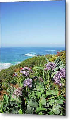 Sothern California Morning Metal Print by Timothy OLeary
