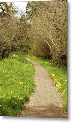 Metal Print featuring the photograph Sour Grass Trail by Art Block Collections