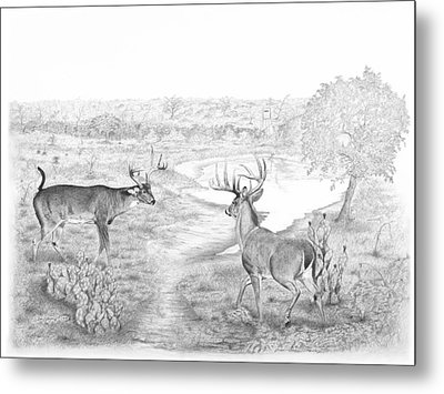 South Texas Stand Off Metal Print by Steve Maynard