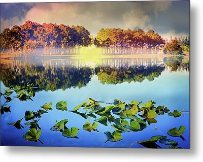 Metal Print featuring the photograph Southern Beauty by Debra and Dave Vanderlaan