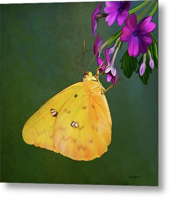 Southern Dogface Butterfly Metal Print