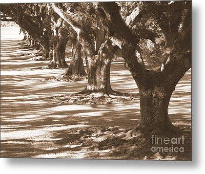 Southern Sunlight On Live Oaks Metal Print by Carol Groenen