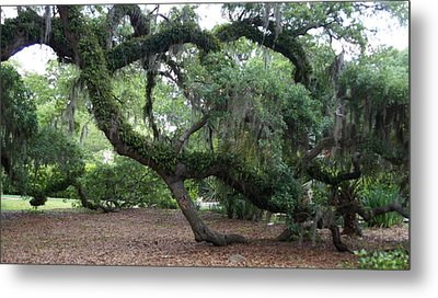 Southern Support Metal Print by David and Lynn Keller