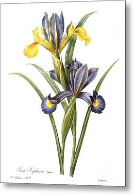 Spanish Iris Metal Print by Granger