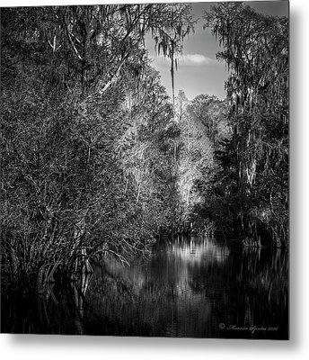 Spanish Moss Metal Print by Marvin Spates