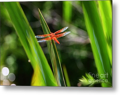 Sparkling Red Dragonfly Metal Print