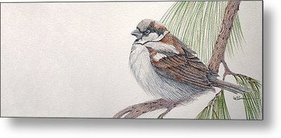 Sparrow Among The Pines Metal Print by Leslie M Browning