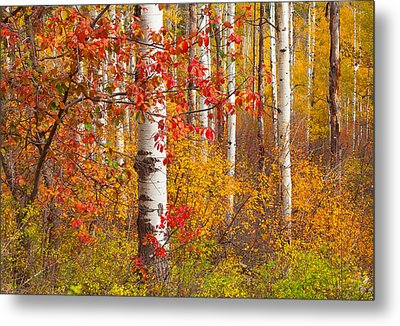 Special Place In The Forest Metal Print by Tim Reaves
