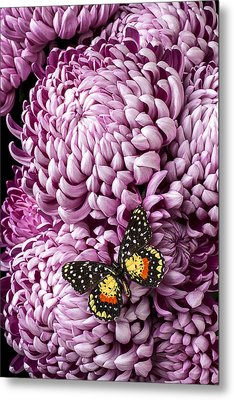 Speckled Butterfly On Red Mum Metal Print by Garry Gay