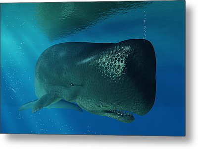 Sperm Whale Metal Print by Daniel Eskridge