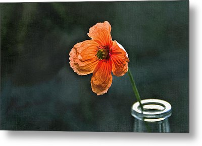 Spicy Red Poppy Metal Print