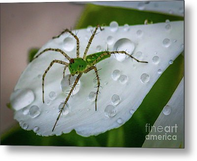 Spider And Flower Petal Metal Print