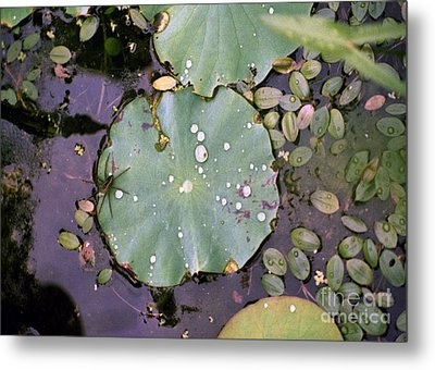 Spider And Lillypad Metal Print by Richard Rizzo