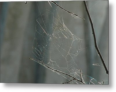 Spider Art Metal Print by Trish Hale