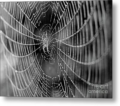 Spider In A Dew Covered Web - Black And White Metal Print