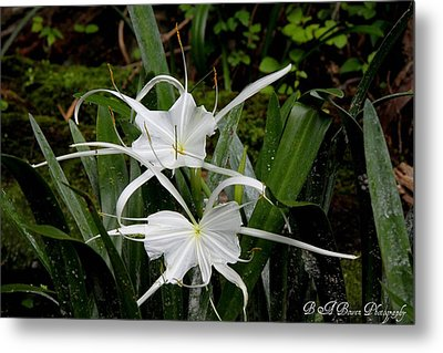 Metal Print featuring the photograph Spider Lilies by Barbara Bowen