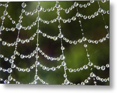Spider Web Decorated By Morning Fog Metal Print by William Lee