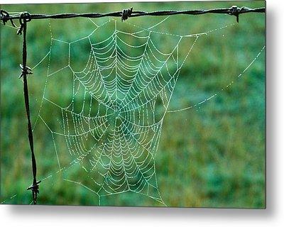 Spider Web In The Springtime Metal Print by Douglas Barnett