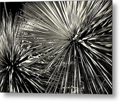 Metal Print featuring the photograph Spines Of The Times by Karen Musick